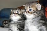 foto gatti 086.JPG