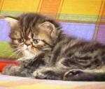 foto gatti 097.jpg