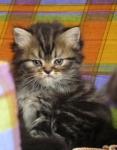 foto gatti 016.jpg