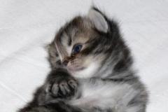 foto gatti 008.JPG