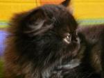 foto gatti pino 027.JPG