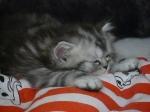 foto gatti 002.jpg
