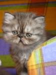 foto gatti pino 001.JPG