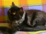 foto gatti pino 030.JPG